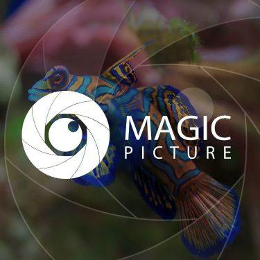 magic-750x750
